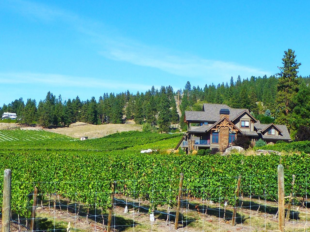 Okanagan wine tours on the Scenic Sip take guests past rolling vineyards in Lake Country.
